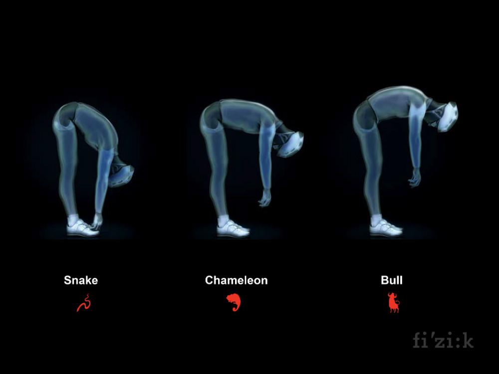 spine concept.jpg